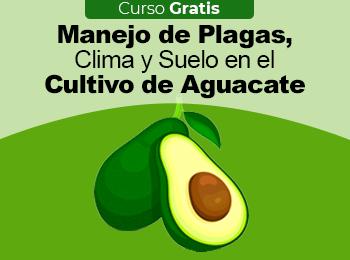 Curso Gratis: Manejo de Plagas, Clima y Suelo en el Cultivo de Aguacate